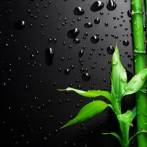 Bamboo su fondo nero