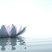 Fiore di loto in acqua