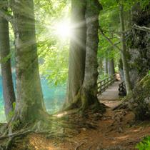 Sole nel bosco