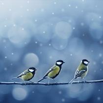 Tre uccellini sul ramo