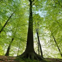 Alberi di una foresta