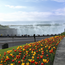 Cascate del Niagara e tulipani