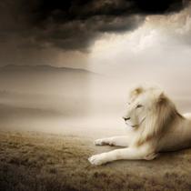 Leone nella savana