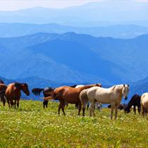 Cavalli sui monti