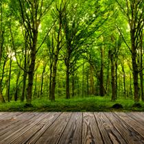 Alberi di foresta