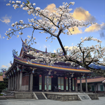 Sakura tempio giapponese