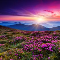 Fiori al tramonto