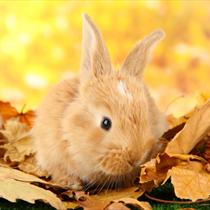 Cucciolo di coniglio sulle foglie