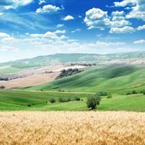 Paesaggio estivo in Toscana