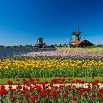 Fiori e mulino olandesi