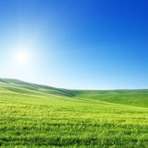 Distesa di erba verde