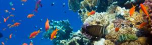 Pesci rossi nel mare for Pesci rossi prezzo