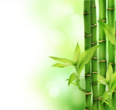 Dettaglio di bamboo