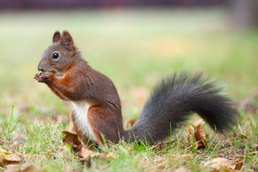 Lo scoiattolo e la nocciolina