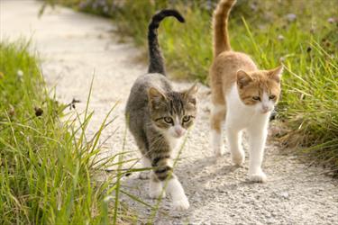 Gatti a passeggio