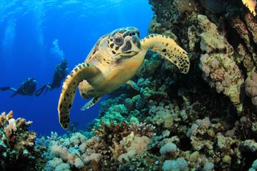 Tartaruga di mare
