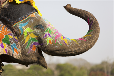 Elefante variopinto