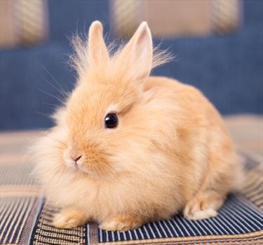 Coniglietto in posa