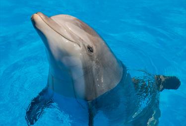 Delfino in primo piano