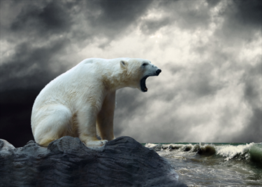 Il ruggito dell'orso polare