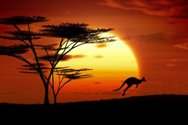 Canguro al tramonto