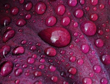 Goccia d'acqua viola