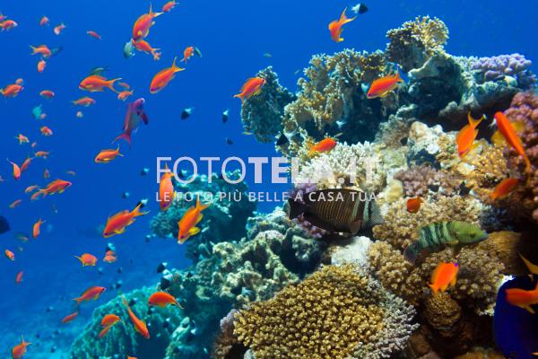 Pesci rossi nel mare for Immagini pesciolini